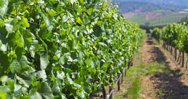 Casablanca Valley - The Wine Route Private Tour