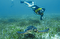 Snorkel and Swim With Turtles, A Fun Way to Discover 4 Areas of Cancun!