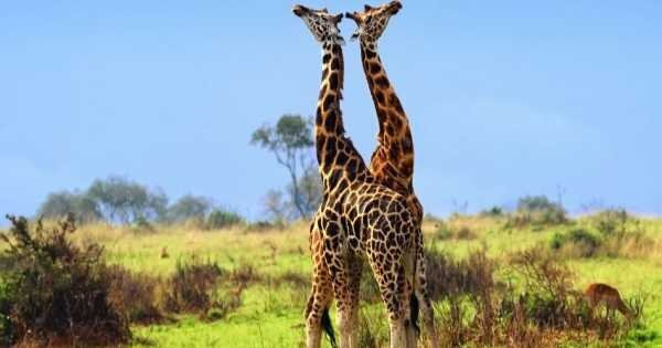 9 Day Safari From Kampala